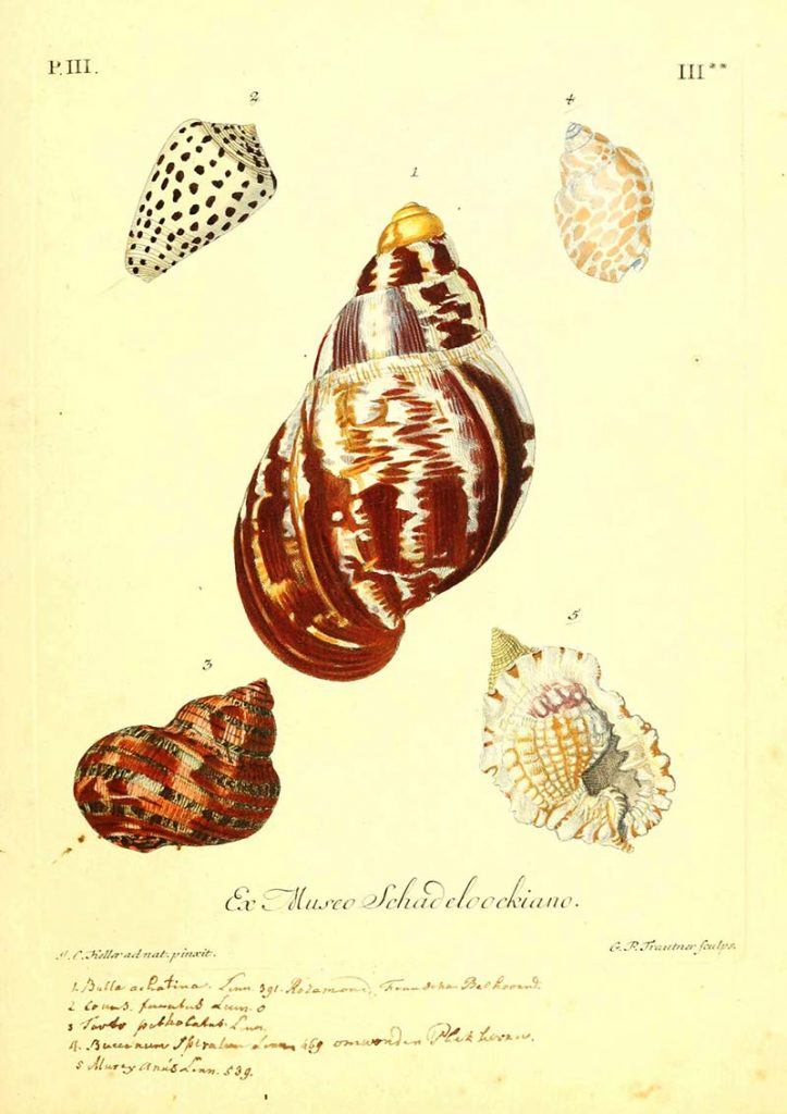 helix shell illustrations