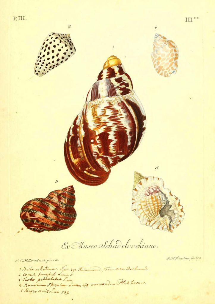 helix shell illustrations