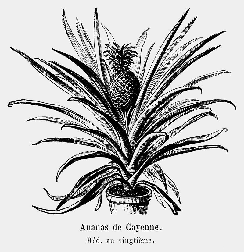 black and white pineapple print