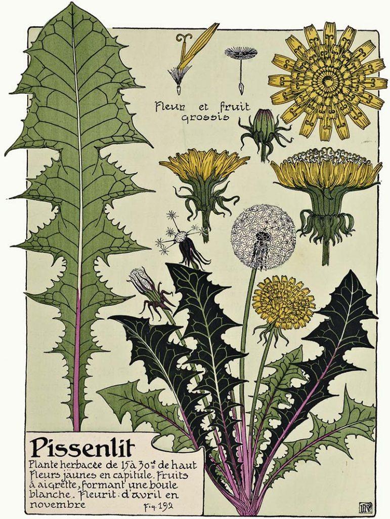 Art Nouveau flower dandelion