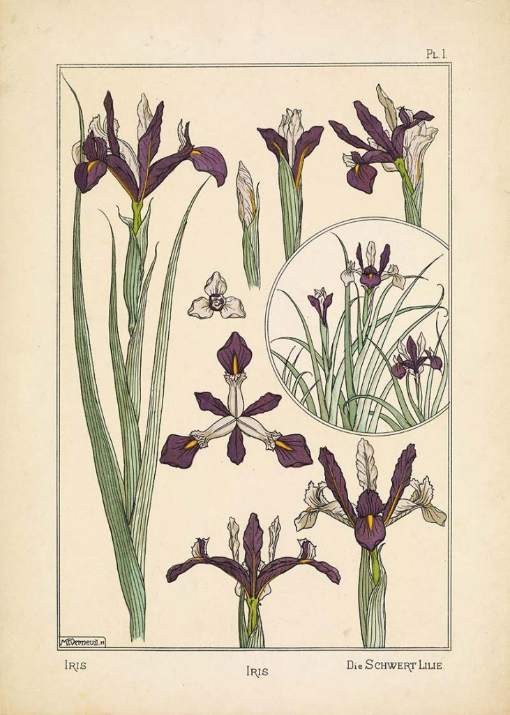 Maurice P. Verneuil Iris botanical print