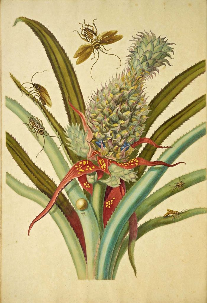 pineapple plant with insects