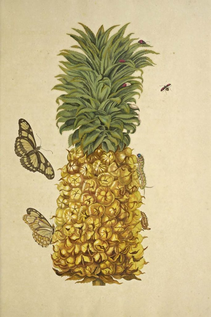 pineapple with insects