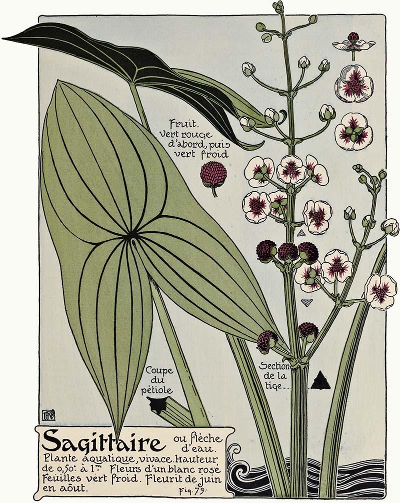 rt Nouveau flower prints