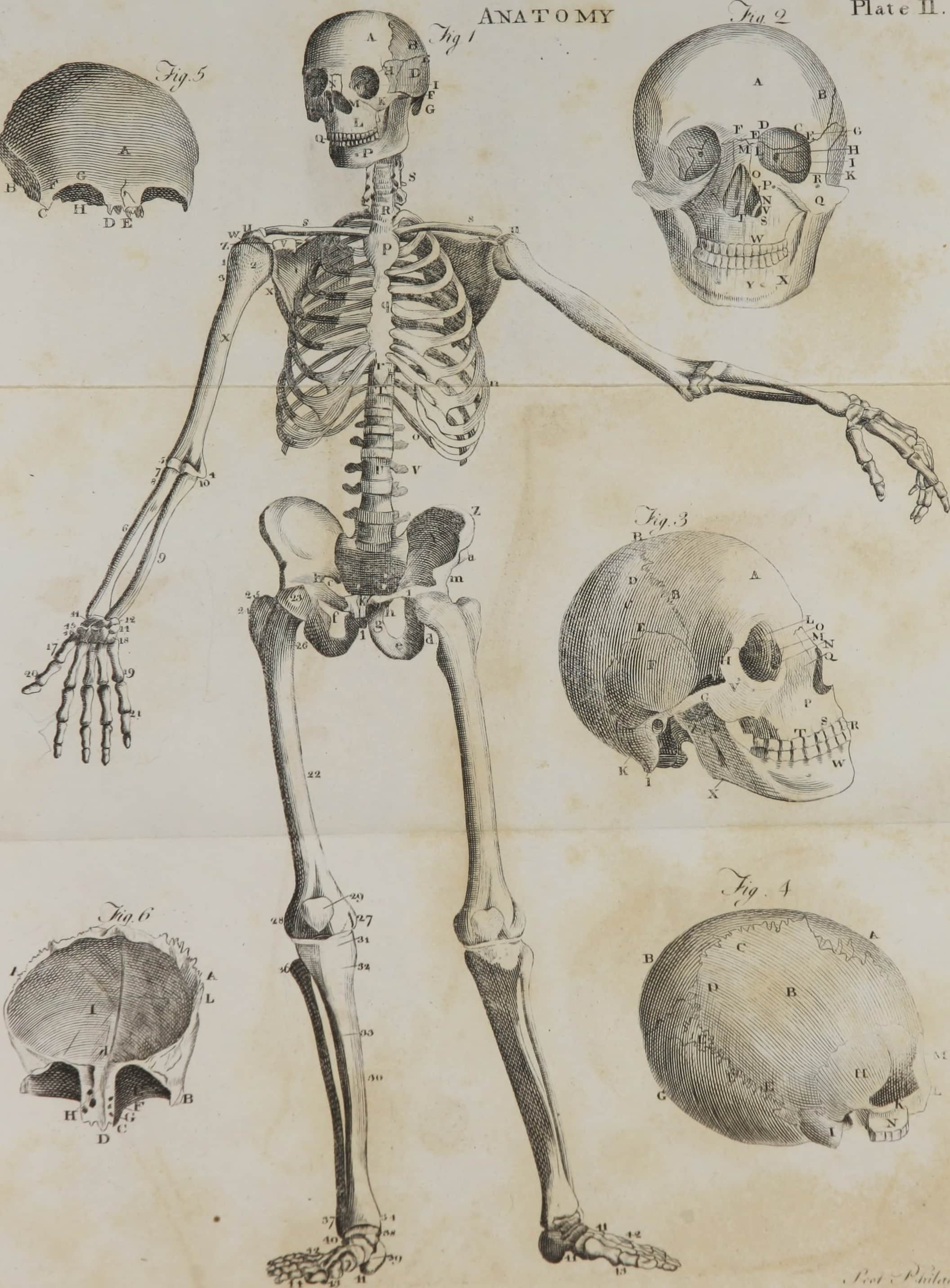 Bone Body Pillow | home decor | pets