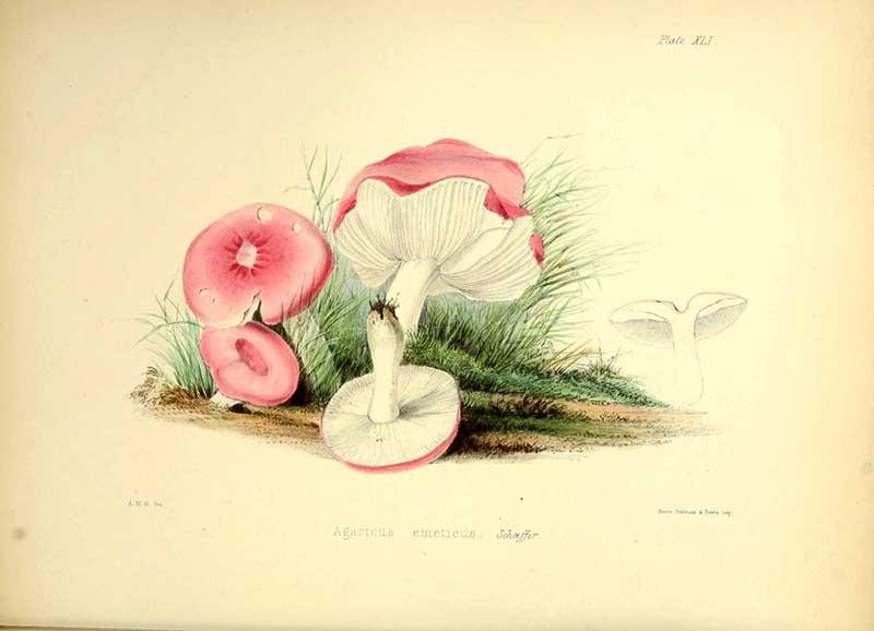 Mushroom sickener
