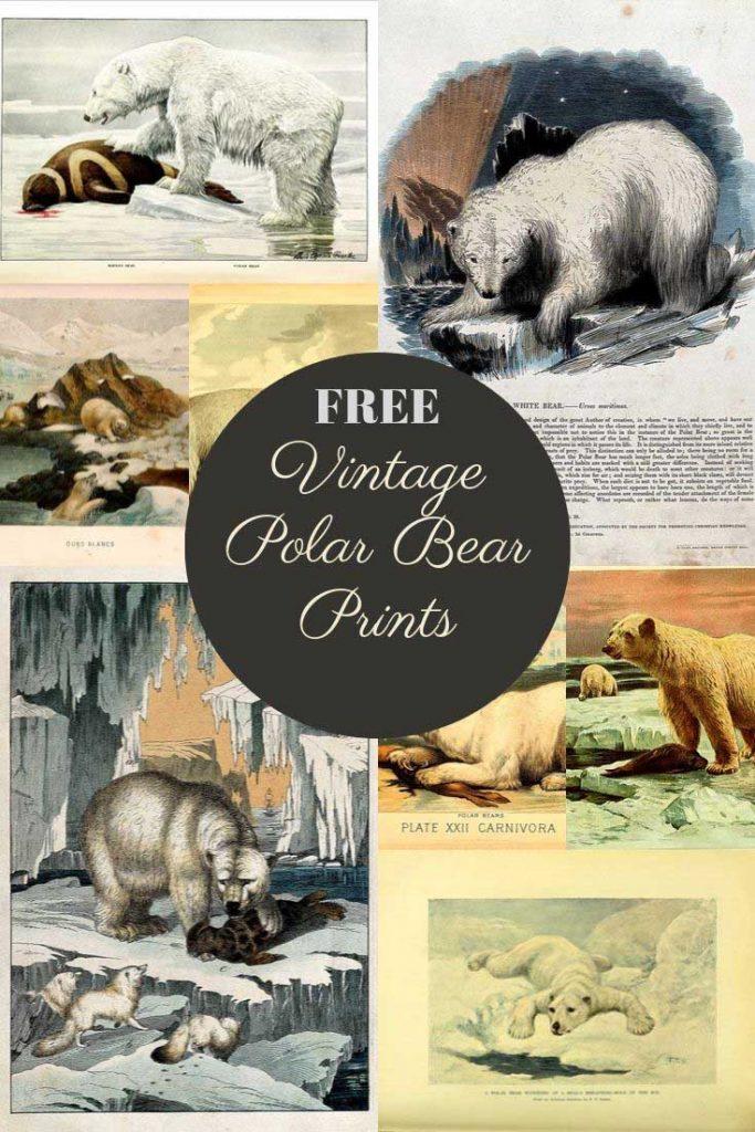 Free vintage polar bear art