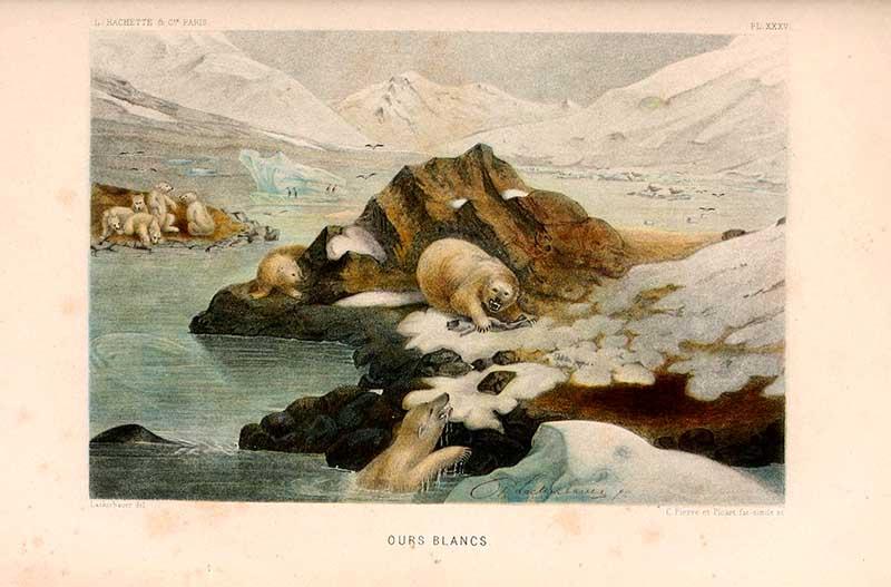 vintage polar bear print