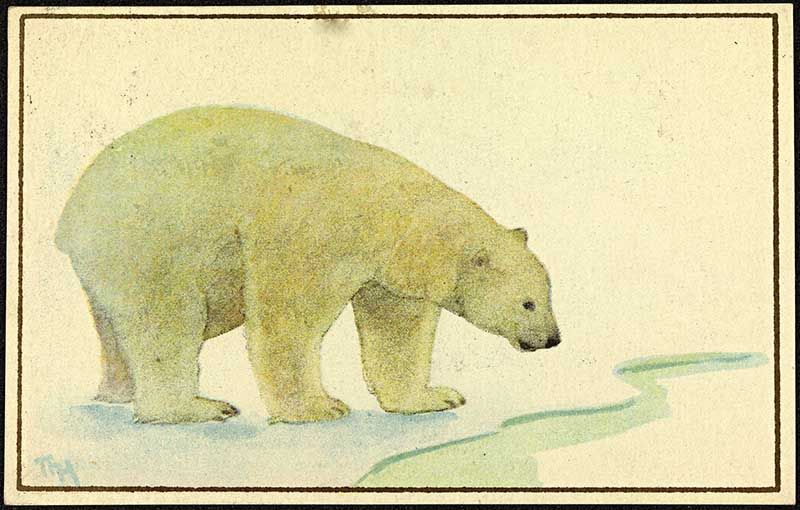 Polar bear at ice hole