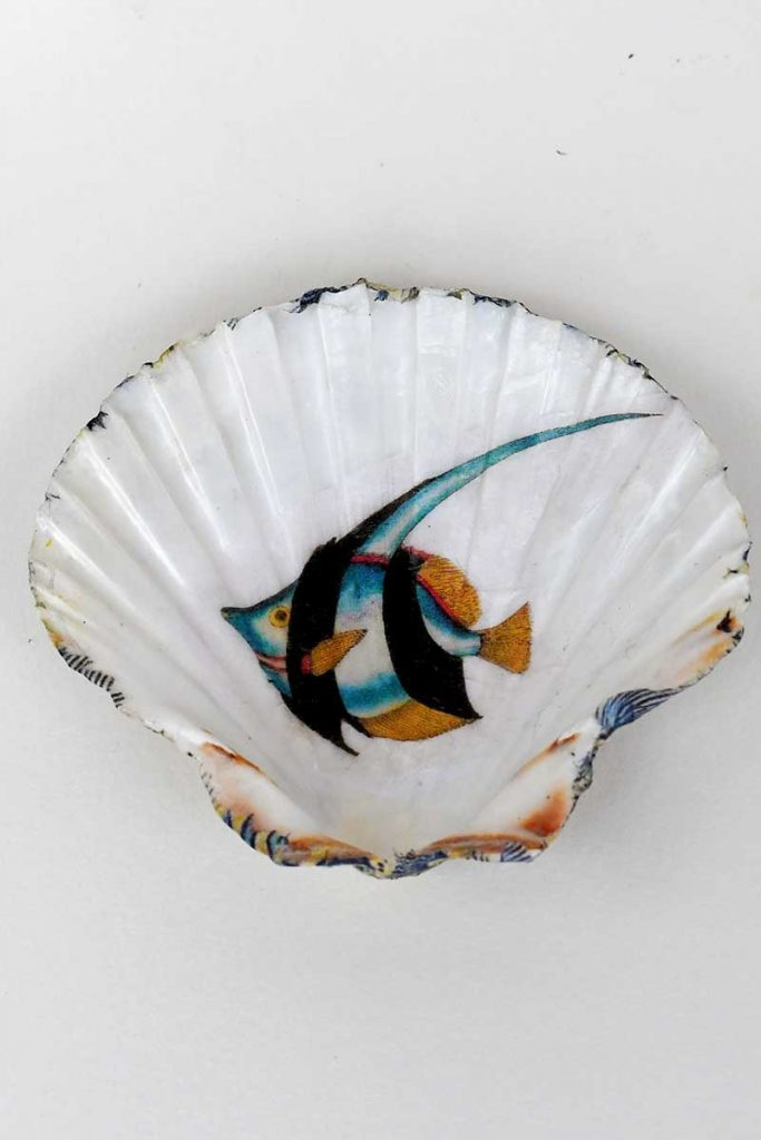 finished shell dish