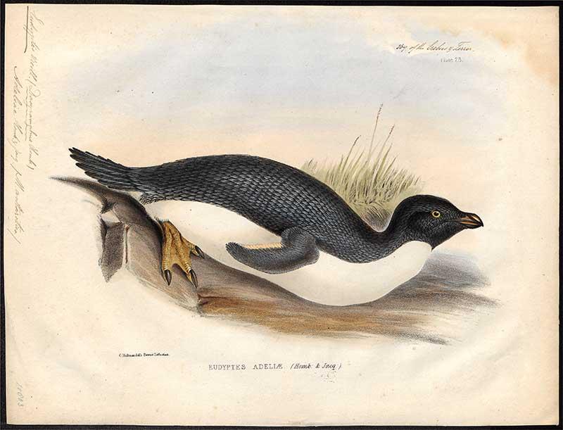 Vintage Adelie Penguin painting
