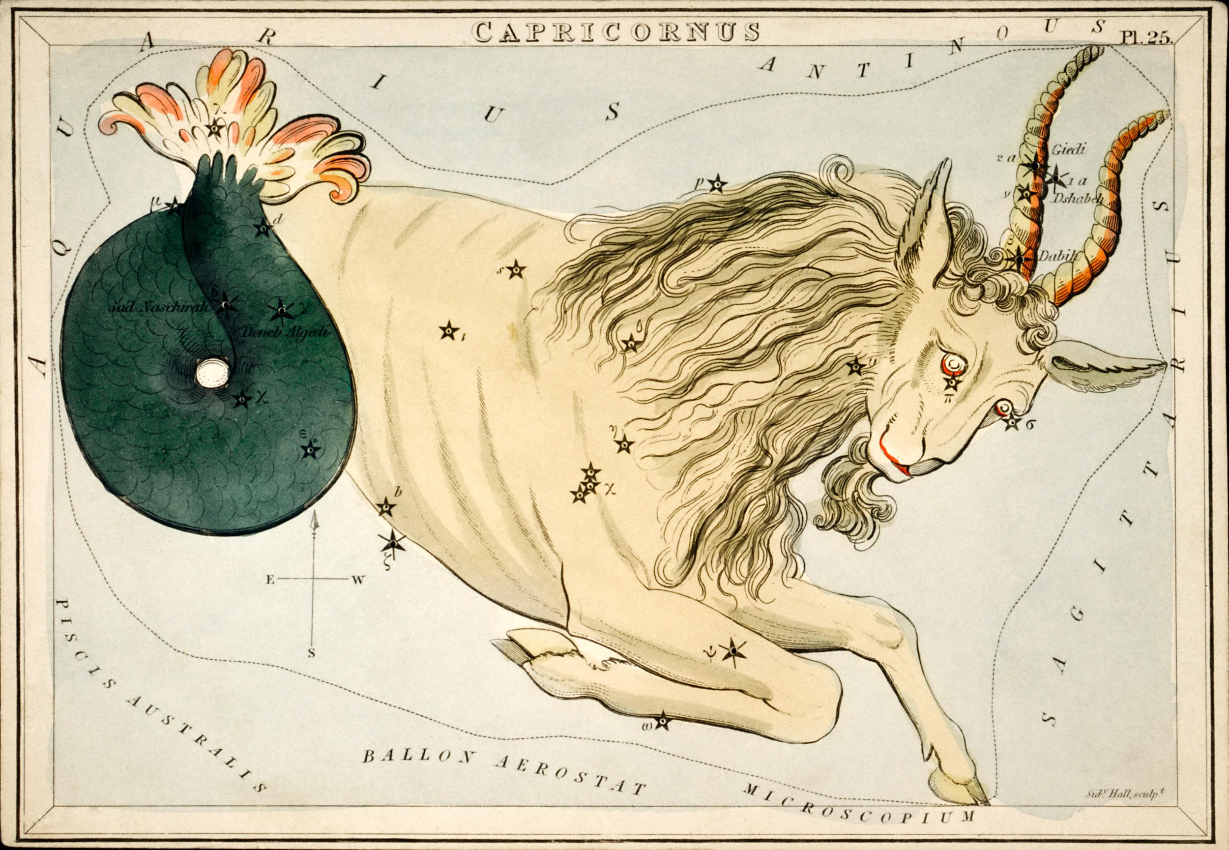 Zoological horoscope