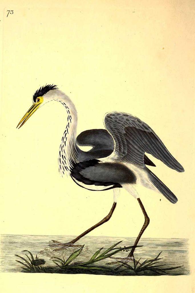Grey heron painting