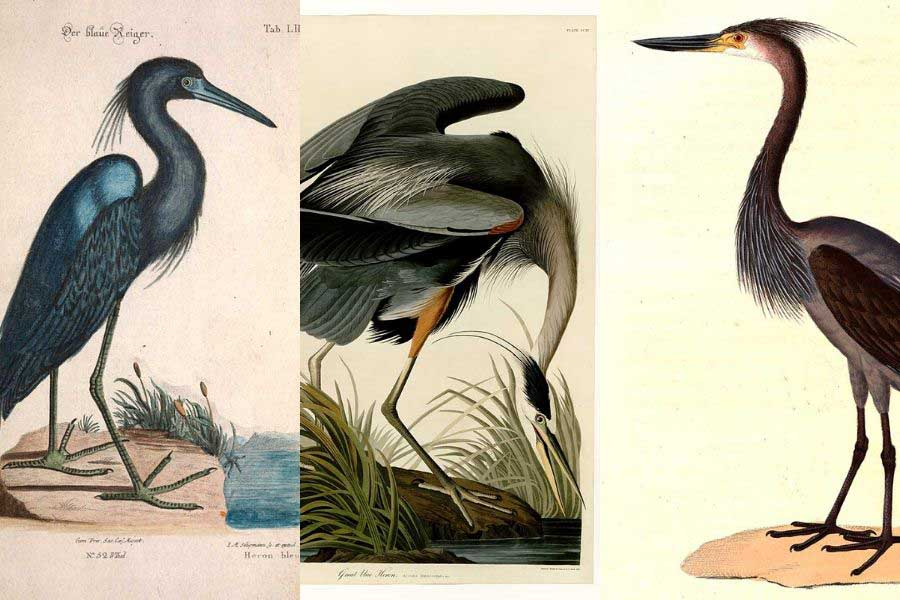vintage heron paintings