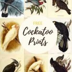 free vintage bird prints