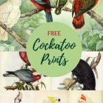 Cockatoo illustrations domain free