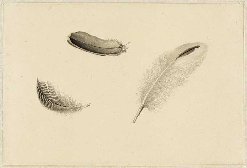 three feathers Dirk Salm