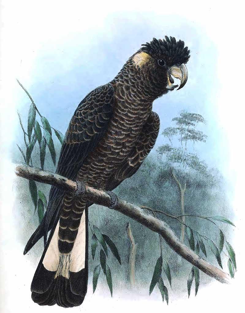 Cockatoo Prints