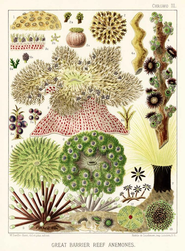 Great Barrier Reef Prints