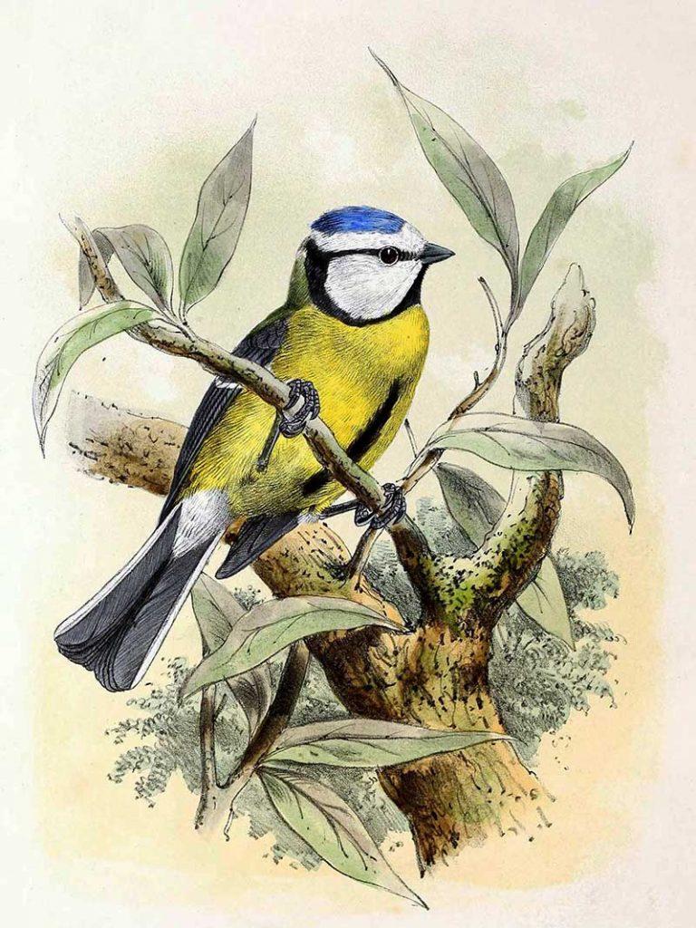 John_Gerrard_Keulemans bird painting