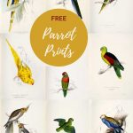Vintage parrot paintings