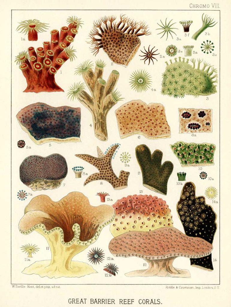 free vintage coral prints