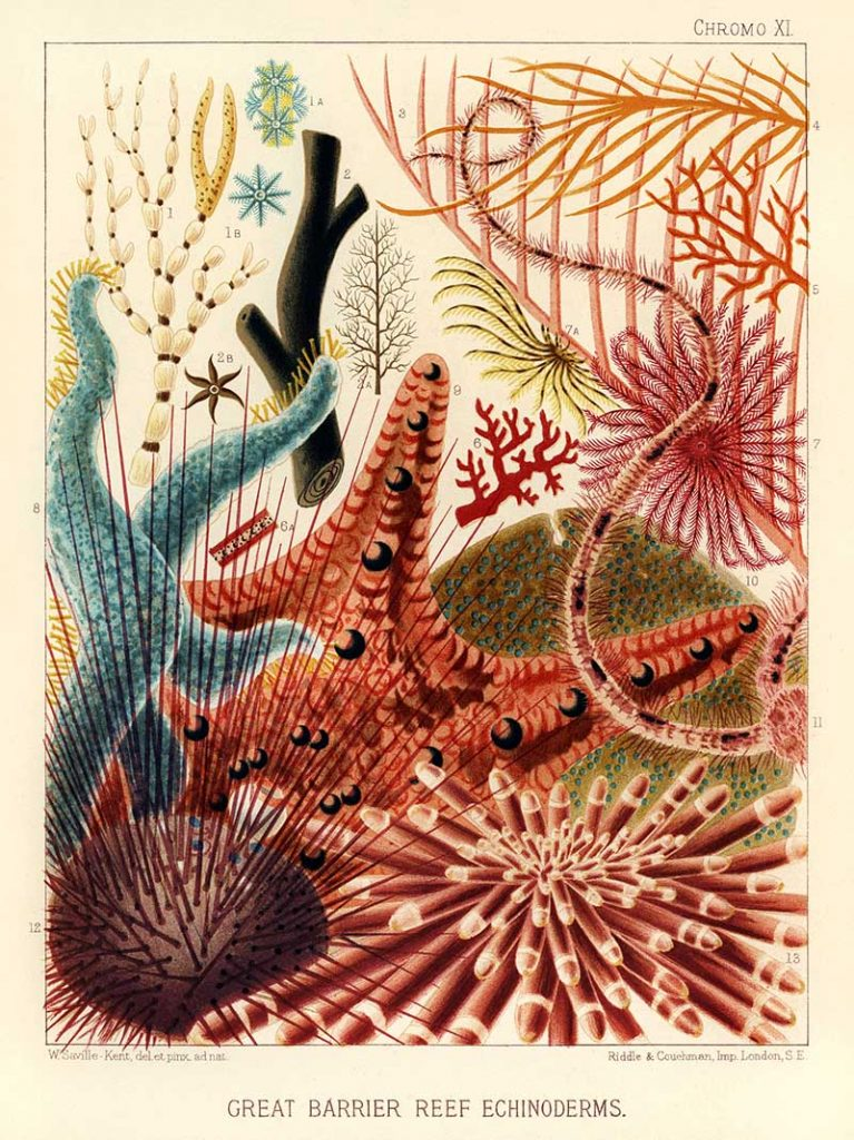 Sealife posters of the great barrier reef