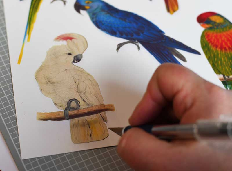 Cutting out the parrots