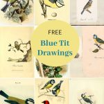 Vintage blue tit prints
