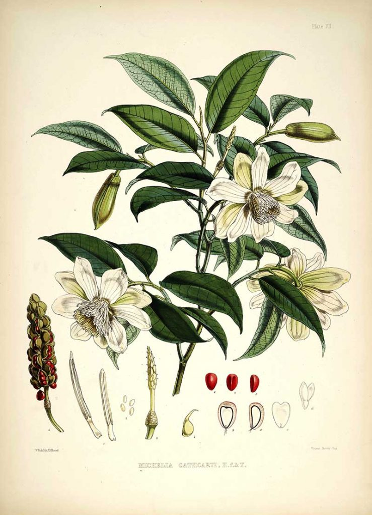 Cathcarts Magnolia print