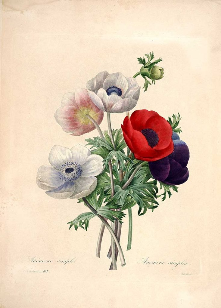 Redoute Flowers from
