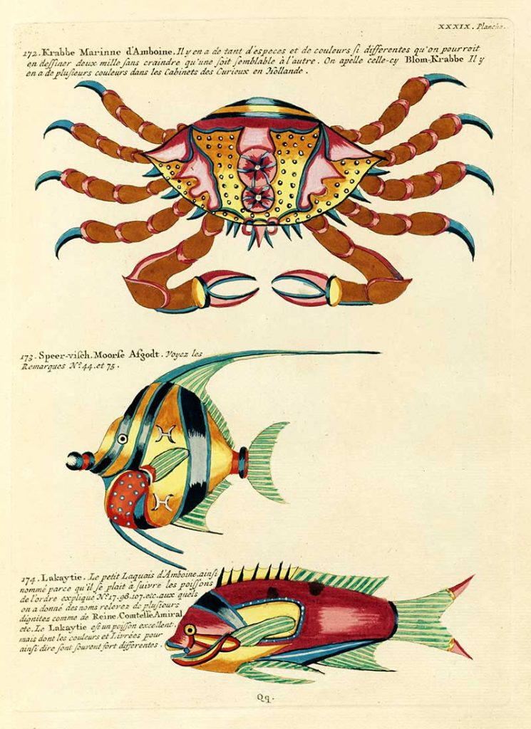 Louis renard Crab and fishes