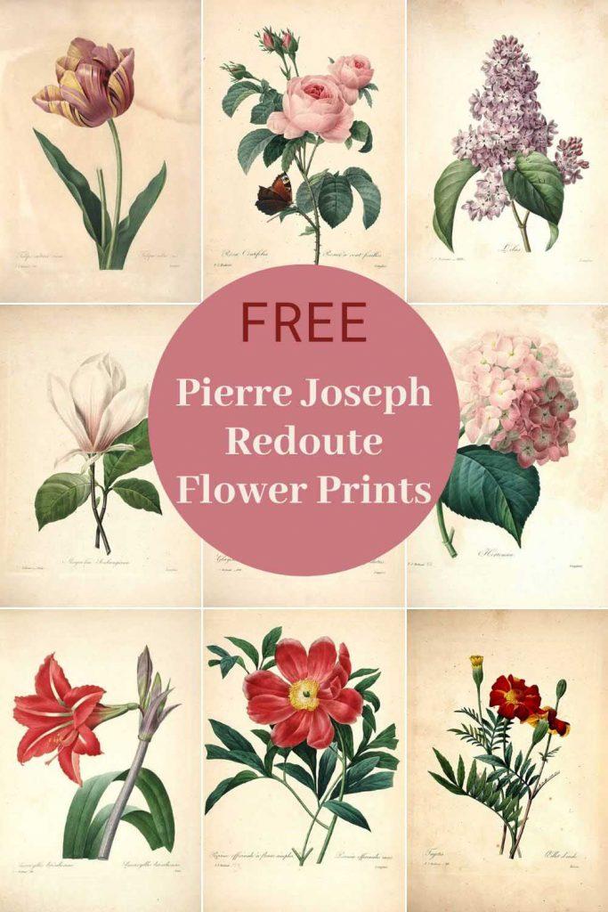 Free Pierre Joseph Redoute flower prints