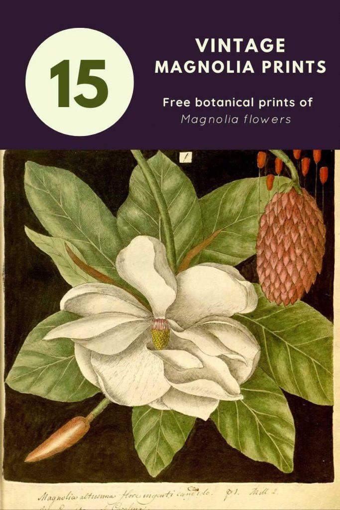 vintage magnolia prints