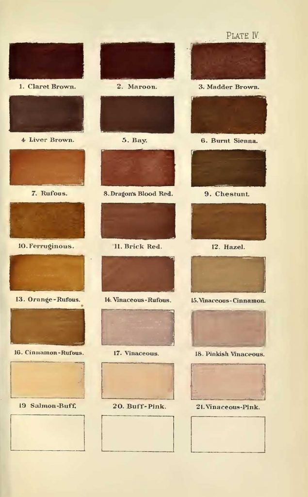 A nomenclature of colors browns 2