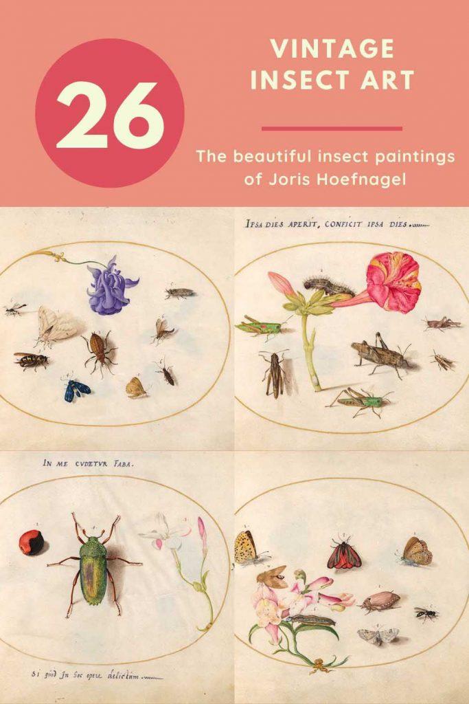 Insect art of Joris Hoefnagel