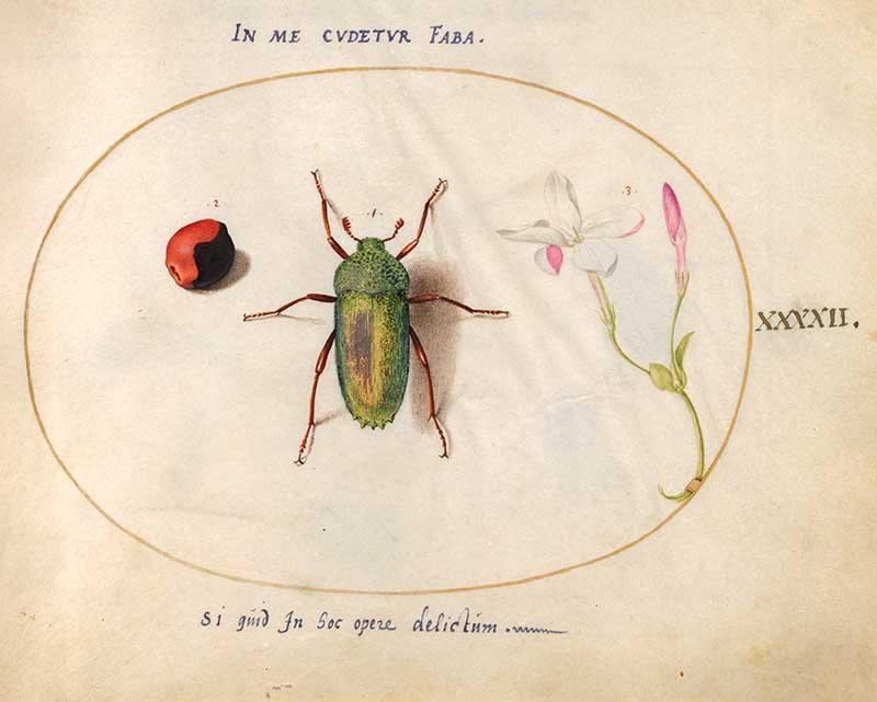 Joris Hoefnagel, Animalia Rationalia et Insecta (Ignis) plate 42