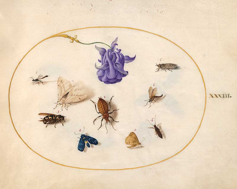 Plate 33 Lilac Flower and Insects