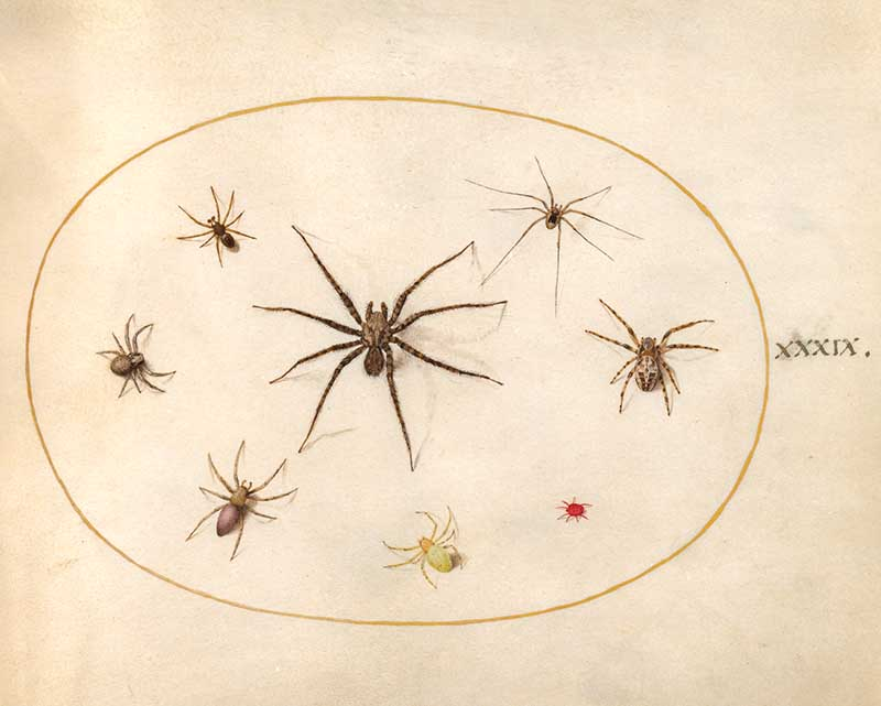 insect art plate 39 spiders