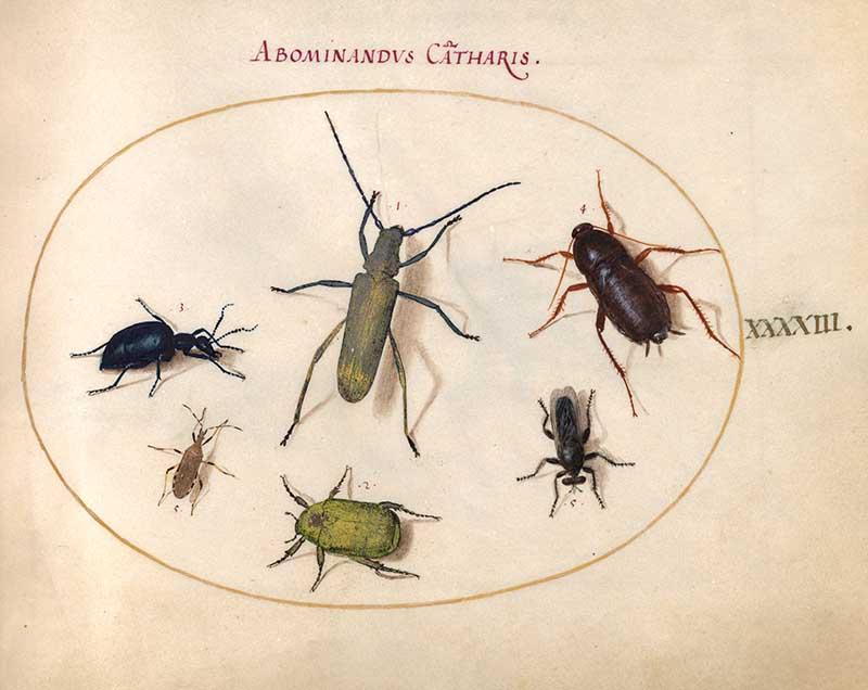 Beetles insect art print