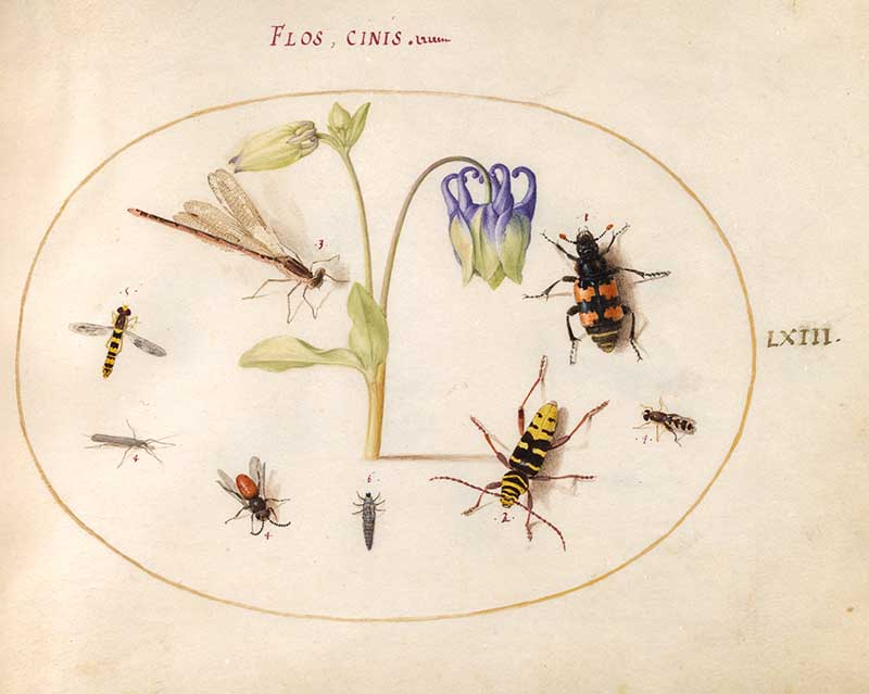Wasps and flowers