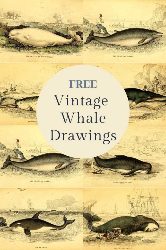 Free whale illustrations