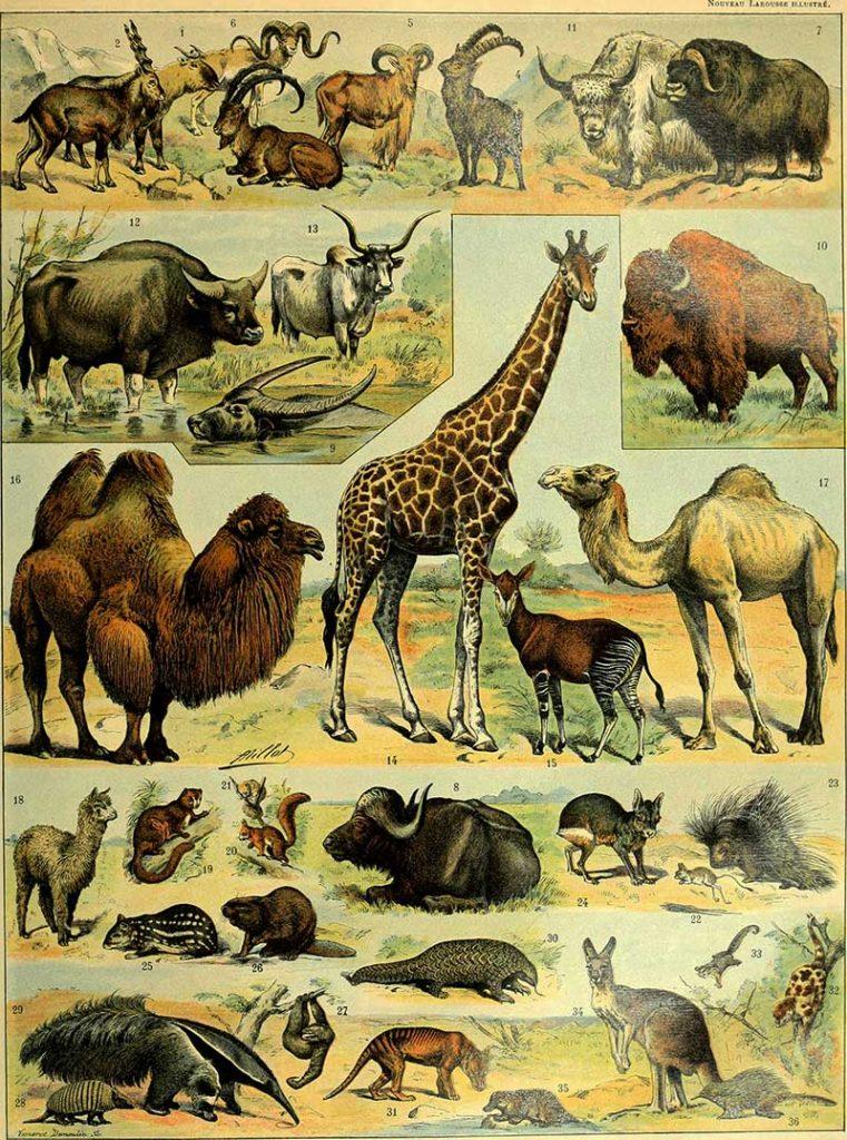 Wild mammals poster