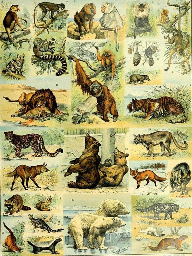 Clawed mammals
