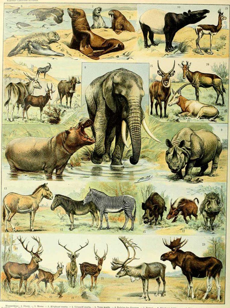 Horned Animal poster