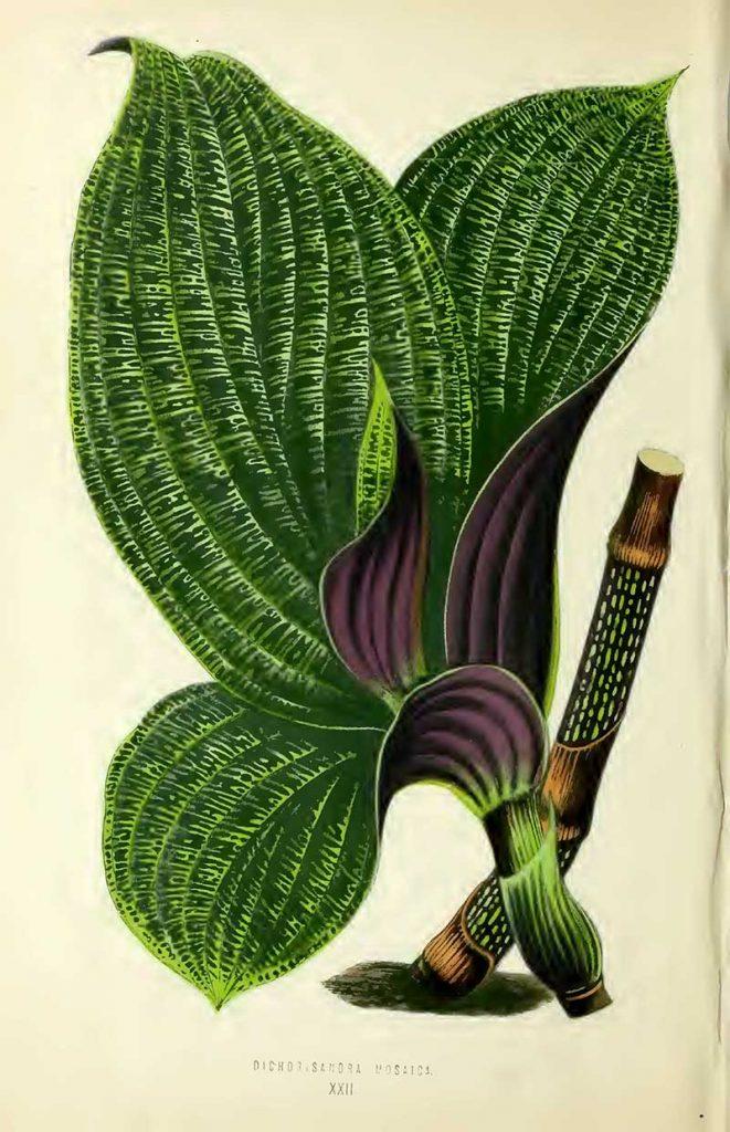 Vintage house plant leaf drawing