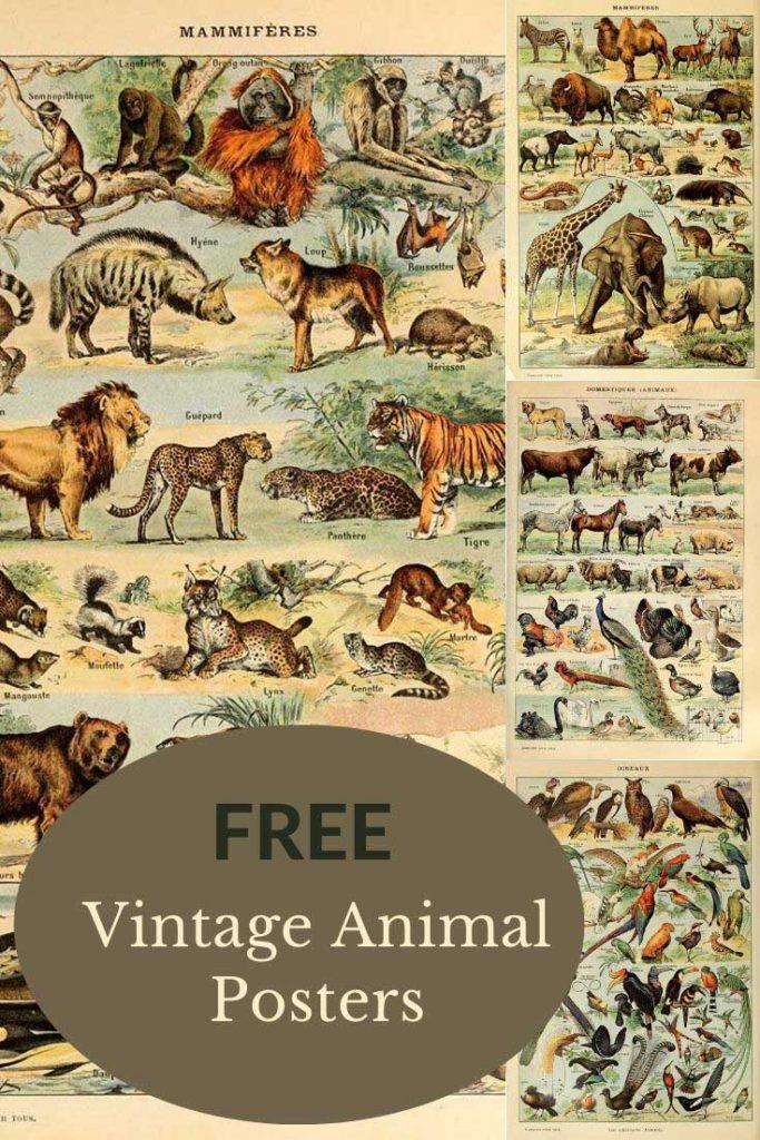 animal poster pin