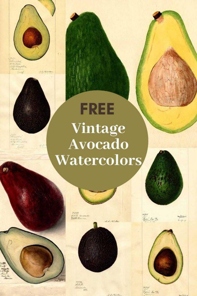 vintage avocado prints