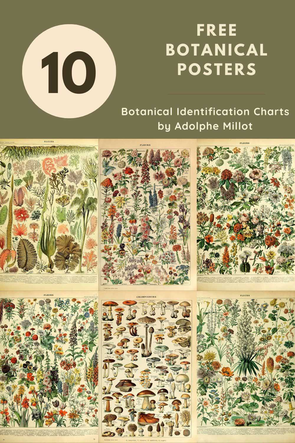 Adolphe Millot Botanical Posters