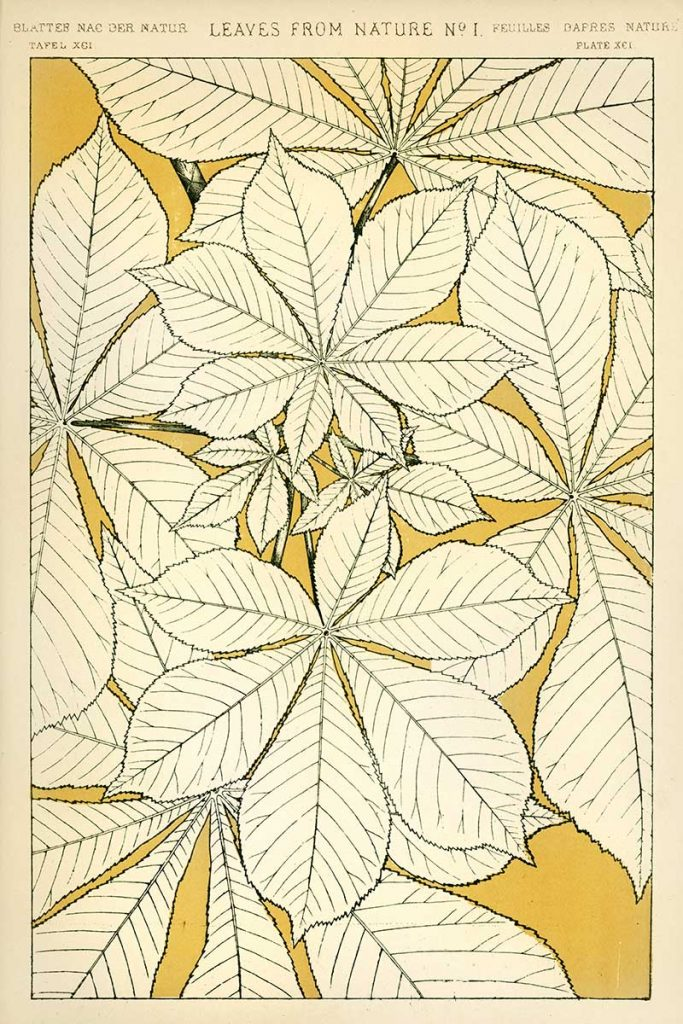 Leaves of Nature No. 1